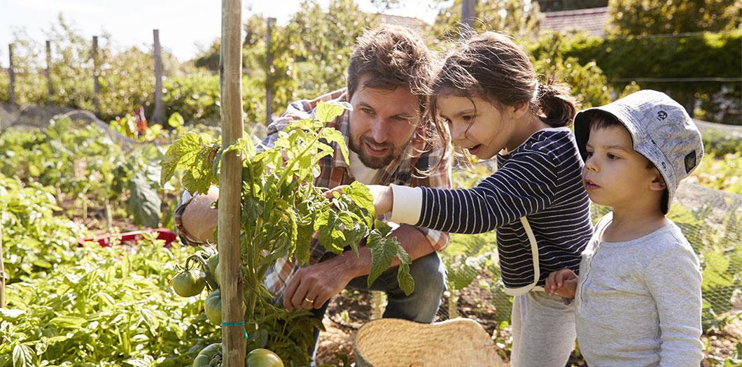 Mitwachsen: ein Obst- und Gemüsegarten für Zuhause