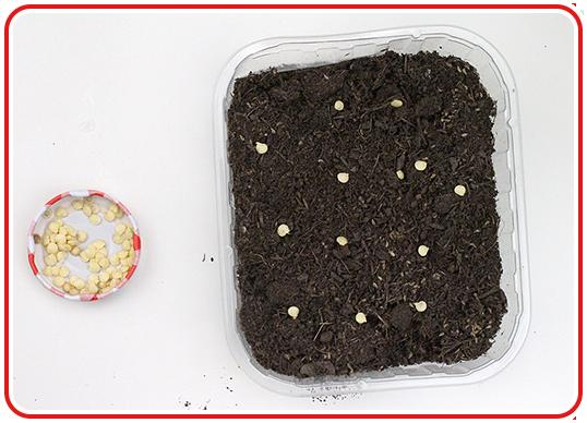 Step 1 - Indoor-Garten anlegen