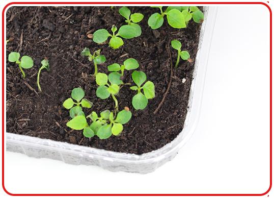Step 4 - Indoor-Garten anlegen