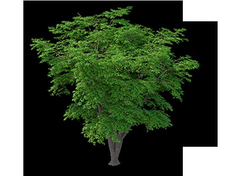 Der Baum-Alltag