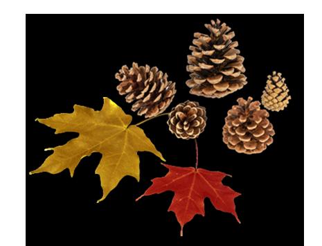Diese Zutaten benötigst Du für ein Herbst-Mobile