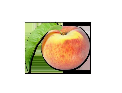 Zutaten für ein leckeres Pfirsicheis