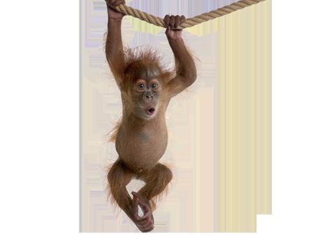 Klappe zu, Affe tot